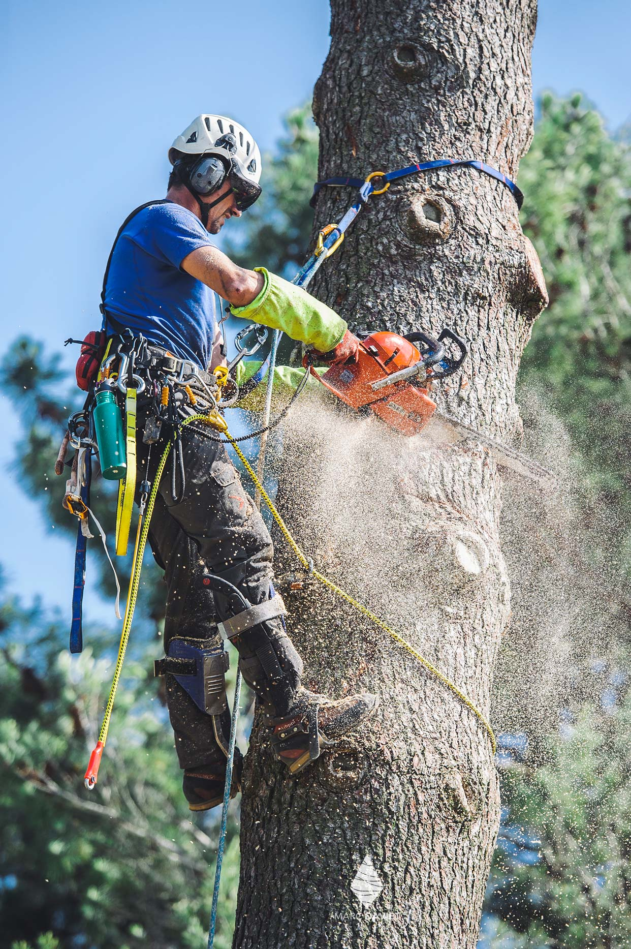 Arborist with a chainsaw
