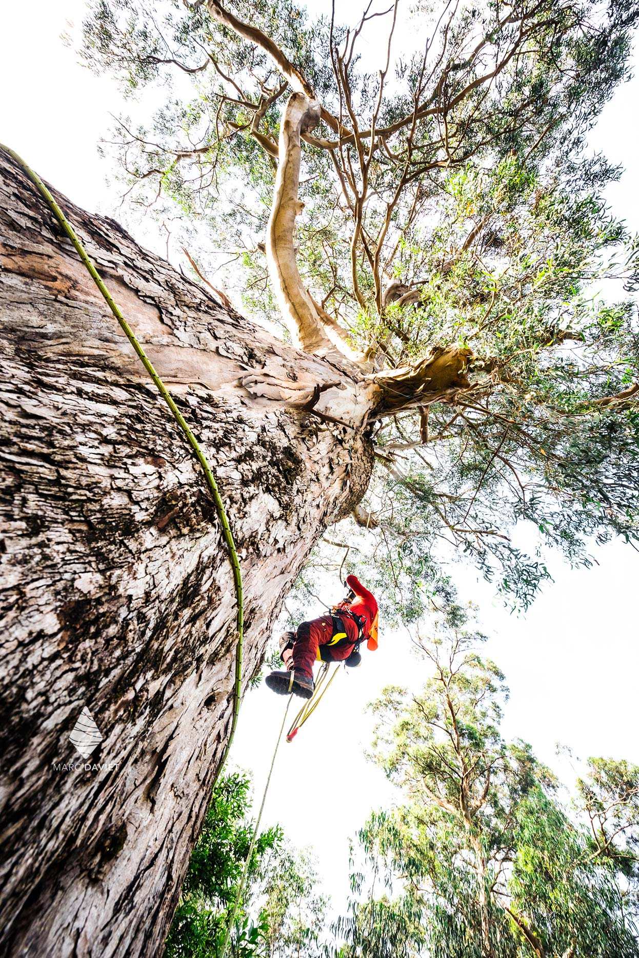 Tree care rope access
